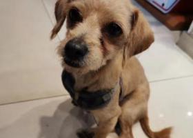 寻狗启示,通用时代广场一只狗狗跟着我们不放手,它是一只非常可爱的宠物狗狗,希望它早日回家,不要变成流浪狗。
