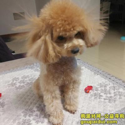 ,请帮助狗狗回家,我们必有重谢,它是一只非常可爱的宠物狗狗,希望它早日回家,不要变成流浪狗。