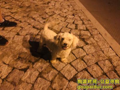 寻狗启示,找狗狗主人 路上遇到可爱狗狗,它是一只非常可爱的宠物狗狗,希望它早日回家,不要变成流浪狗。