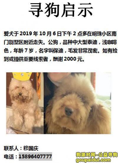 泰州找狗,爱犬于2019年10月6日下午2点多在明珠小区南门别墅区附近走失,它是一只非常可爱的宠物狗狗,希望它早日回家,不要变成流浪狗。