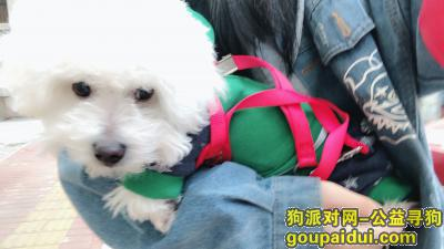 台州丢狗,温岭大溪宜桥村跑出去丢失,它是一只非常可爱的宠物狗狗,希望它早日回家,不要变成流浪狗。