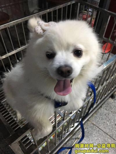 爱犬于2019年10月6日晚在平谷区胜利街友谊路32排4号走失,它是一只非常可爱的宠物狗狗,希望它早日回家,不要变成流浪狗。