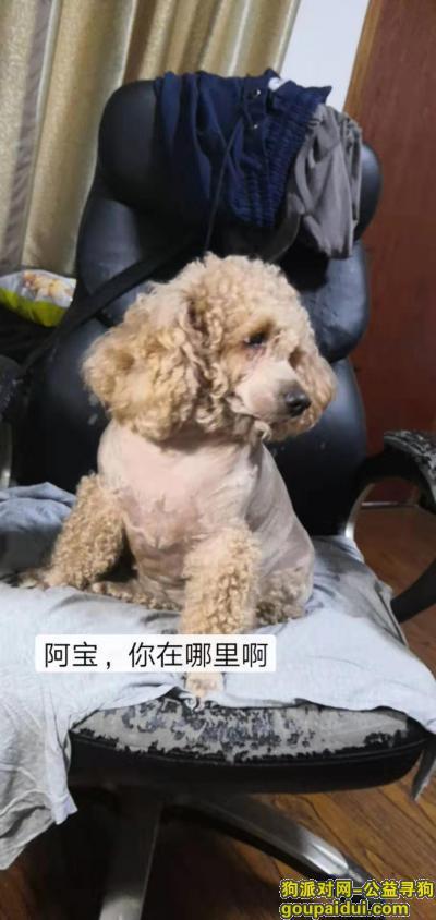 爱犬于2019年9月5日上午在德清县上柏姚家墩黄前村附近走失,它是一只非常可爱的宠物狗狗,希望它早日回家,不要变成流浪狗。