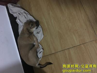 乐山寻狗启示,感恩好心人帮忙寻找狗!,它是一只非常可爱的宠物狗狗,希望它早日回家,不要变成流浪狗。