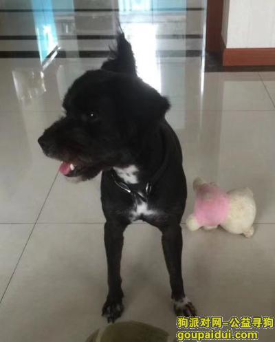 南通寻狗启示,爱犬于2019年10月4日晚8点在海门市光华小区附近走失,它是一只非常可爱的宠物狗狗,希望它早日回家,不要变成流浪狗。