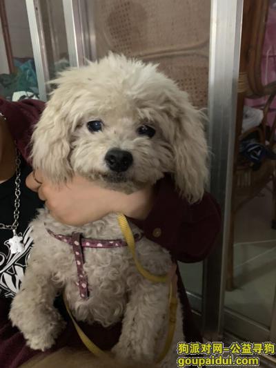 寻狗启示,在桂林市东安街捡到比熊公宝宝一只,它是一只非常可爱的宠物狗狗,希望它早日回家,不要变成流浪狗。