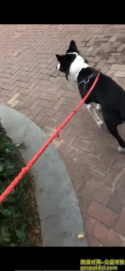 寻狗启示,寻边牧,燕江新城山水苑丢失,它是一只非常可爱的宠物狗狗,希望它早日回家,不要变成流浪狗。