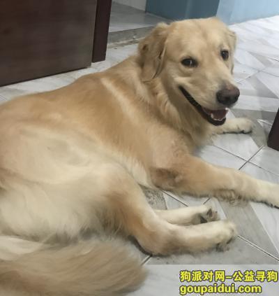 荆州丢狗,爱犬于2019年10月11日凌晨2点在民主路新华书店附近走失,它是一只非常可爱的宠物狗狗,希望它早日回家,不要变成流浪狗。