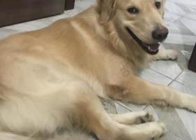 寻狗启示,爱犬于2019年10月11日凌晨2点在民主路新华书店附近走失,它是一只非常可爱的宠物狗狗,希望它早日回家,不要变成流浪狗。