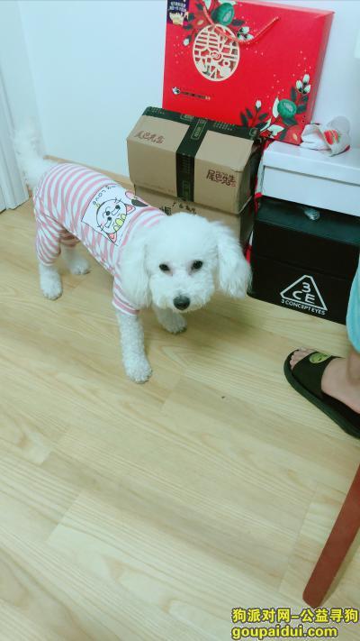 莆田寻狗启示,公比熊 走丢的时候就是穿着图片上的衣服,它是一只非常可爱的宠物狗狗,希望它早日回家,不要变成流浪狗。