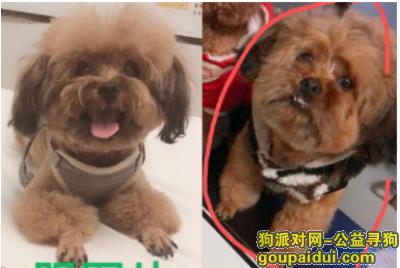 衢州找狗,爱犬于2019年10月8日晚在衢江区沈家东迹三巷附近走失,它是一只非常可爱的宠物狗狗,希望它早日回家,不要变成流浪狗。