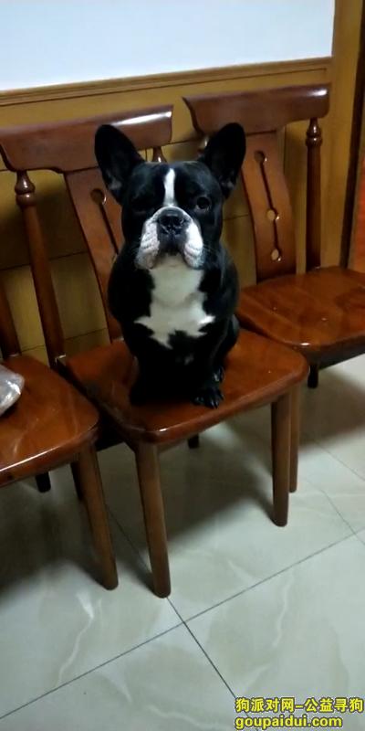 绍兴丢狗,本人急需寻找爱犬迷修,它是一只非常可爱的宠物狗狗,希望它早日回家,不要变成流浪狗。