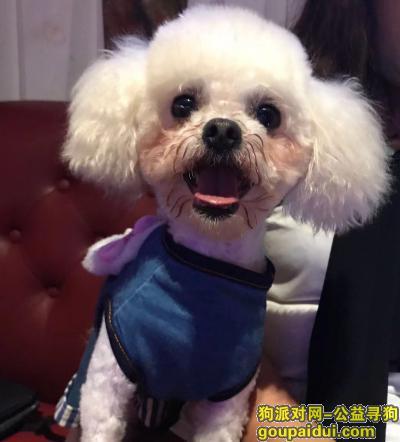 遂宁找狗,爱犬于2019年10月13日下午2点20在射洪县迎宾大道南段五家桥村走失,它是一只非常可爱的宠物狗狗,希望它早日回家,不要变成流浪狗。