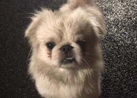寻狗启示,替白色狗狗找主人_上海浦东世博园区,它是一只非常可爱的宠物狗狗,希望它早日回家,不要变成流浪狗。
