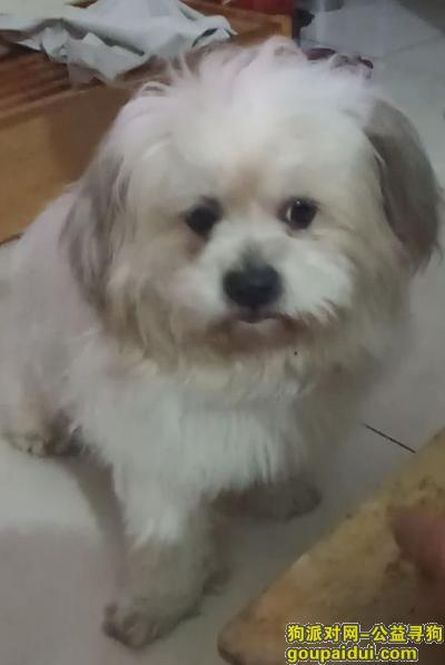 新余寻狗网,江西省新余市渝水区寻狗,它是一只非常可爱的宠物狗狗,希望它早日回家,不要变成流浪狗。