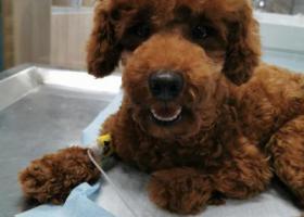 寻狗启示,航头泰迪走丢,重金寻宠,它是一只非常可爱的宠物狗狗,希望它早日回家,不要变成流浪狗。