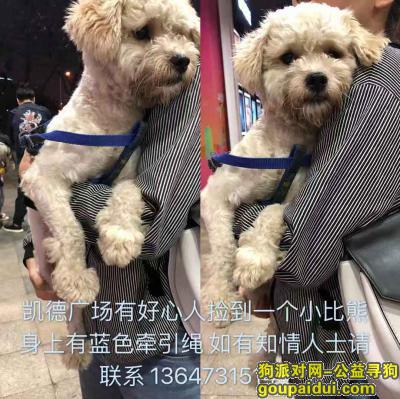 长沙捡到狗,凯德广场捡到一个比熊有蓝色绳子,它是一只非常可爱的宠物狗狗,希望它早日回家,不要变成流浪狗。