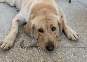 寻狗启示,重金寻狗,狗狗于10月16日早上9点半左右不见希望有好心人看到能联系我17807620307,它是一只非常可爱的宠物狗狗,希望它早日回家,不要变成流浪狗。