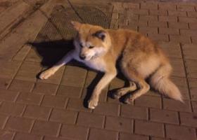 寻狗启示,红沟靶场路434小区捡到,15234939843,它是一只非常可爱的宠物狗狗,希望它早日回家,不要变成流浪狗。