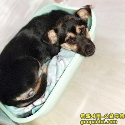 南通找狗,请帮忙寻找我的豆豆,谢谢!,它是一只非常可爱的宠物狗狗,希望它早日回家,不要变成流浪狗。