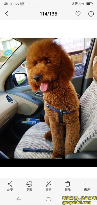 扬州找狗,寻找巨贵狗狗sunny,烦请留意,它是一只非常可爱的宠物狗狗,希望它早日回家,不要变成流浪狗。