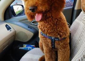 寻狗启示,寻找巨贵狗狗sunny,烦请留意,它是一只非常可爱的宠物狗狗,希望它早日回家,不要变成流浪狗。