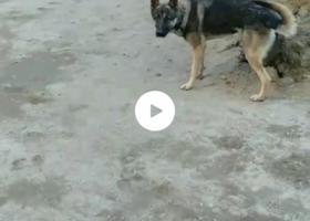 寻狗启示,鹤岗的朋友帮忙找寻丢失的狗狗欢欢,它是一只非常可爱的宠物狗狗,希望它早日回家,不要变成流浪狗。