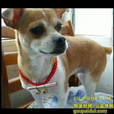 寻狗启示,我想麻麻 请送我回家吧,它是一只非常可爱的宠物狗狗,希望它早日回家,不要变成流浪狗。