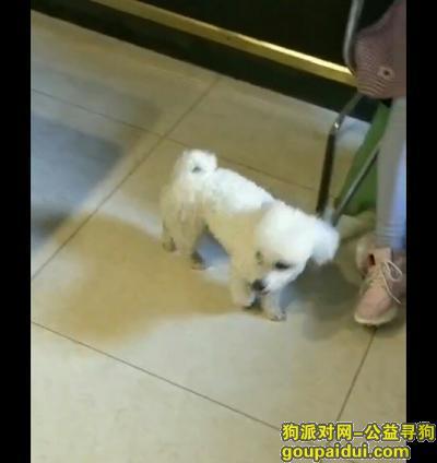 【遵义捡到狗】,遵义市长沙路德国马牌捡的,它是一只非常可爱的宠物狗狗,希望它早日回家,不要变成流浪狗。