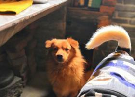 寻狗启示,10月17日晚7点左右狗狗不见了,急,它是一只非常可爱的宠物狗狗,希望它早日回家,不要变成流浪狗。