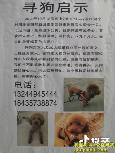 ,小公泰迪在邢台国际新城附近丢失,它是一只非常可爱的宠物狗狗,希望它早日回家,不要变成流浪狗。