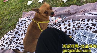 ,寻找爱狗——太阳 早日回家,它是一只非常可爱的宠物狗狗,希望它早日回家,不要变成流浪狗。