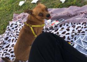 寻狗启示,寻找爱狗——太阳 早日回家,它是一只非常可爱的宠物狗狗,希望它早日回家,不要变成流浪狗。