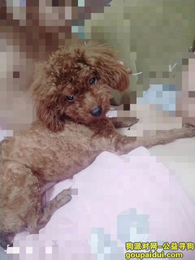 寻狗启示,望广大朋友帮忙找爱犬,谢谢了,它是一只非常可爱的宠物狗狗,希望它早日回家,不要变成流浪狗。