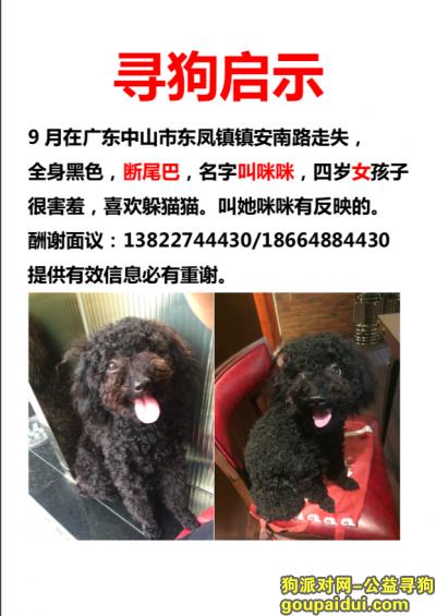 中山找狗,广东中山东凤寻狗,9月不见了泰迪女孩子,断尾巴,它是一只非常可爱的宠物狗狗,希望它早日回家,不要变成流浪狗。