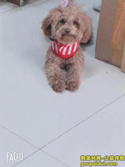 寻狗启示,爱犬于2019年10月17日下午18点40在宁夏中卫市沙坡头区鸣翠苑附近走失,它是一只非常可爱的宠物狗狗,希望它早日回家,不要变成流浪狗。