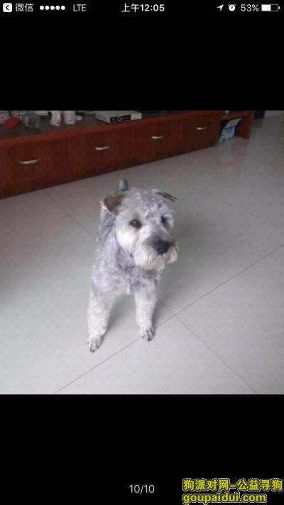 玉林找狗,2019年中秋节在天湖·御林湾走失,它是一只非常可爱的宠物狗狗,希望它早日回家,不要变成流浪狗。
