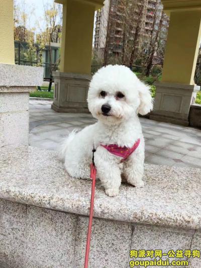 宿迁寻狗启示,宿城新区文化馆比熊走丢,请送回,重谢,它是一只非常可爱的宠物狗狗,希望它早日回家,不要变成流浪狗。