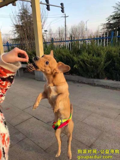 莱芜寻狗,必有重谢在莱芜沙王庄附近丢失狗狗,它是一只非常可爱的宠物狗狗,希望它早日回家,不要变成流浪狗。