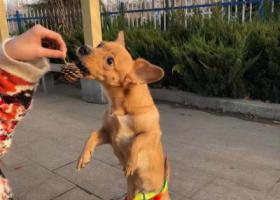 寻狗启示,必有重谢在莱芜沙王庄附近丢失狗狗,它是一只非常可爱的宠物狗狗,希望它早日回家,不要变成流浪狗。