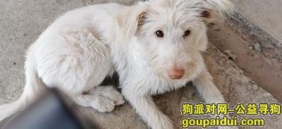 邵阳找狗,遗失狗狗的地方在邵阳市高崇山镇,它是一只非常可爱的宠物狗狗,希望它早日回家,不要变成流浪狗。