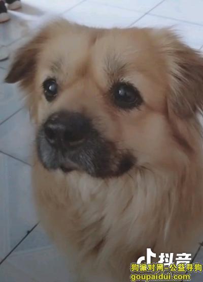 ,重金寻狗点点,田园犬,很着急,帮忙转发,它是一只非常可爱的宠物狗狗,希望它早日回家,不要变成流浪狗。