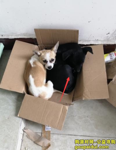 连云港寻狗,大家帮帮忙,找找这条黑狗,它是一只非常可爱的宠物狗狗,希望它早日回家,不要变成流浪狗。