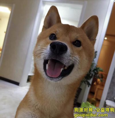 唐山寻狗网,玉田寻狗  必有重谢很着急谢谢,它是一只非常可爱的宠物狗狗,希望它早日回家,不要变成流浪狗。