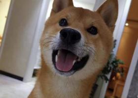 寻狗启示,玉田寻狗  必有重谢很着急谢谢,它是一只非常可爱的宠物狗狗,希望它早日回家,不要变成流浪狗。