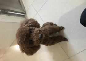 寻狗启示,广州市番禺区洛溪村石涌街走丢的,它是一只非常可爱的宠物狗狗,希望它早日回家,不要变成流浪狗。
