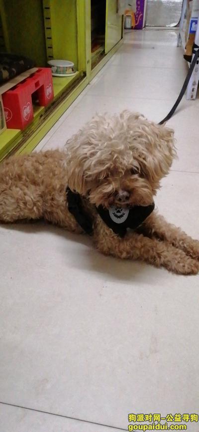 沈阳找狗主人,毛孩子很听话 但是很害怕 寻主!!!,它是一只非常可爱的宠物狗狗,希望它早日回家,不要变成流浪狗。