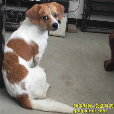 台州寻狗启示,找爱狗小7 ,7快回家。快回家,它是一只非常可爱的宠物狗狗,希望它早日回家,不要变成流浪狗。