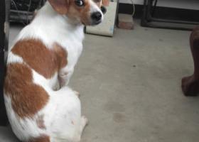 寻狗启示,找爱狗小7 ,7快回家。快回家,它是一只非常可爱的宠物狗狗,希望它早日回家,不要变成流浪狗。