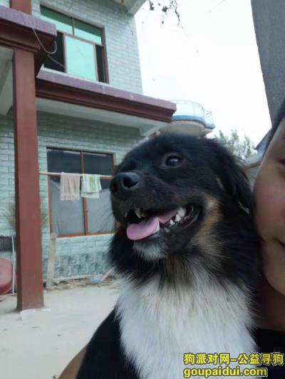 阜阳寻狗启示,麻烦各大好心人,谢谢帮一下忙,它是一只非常可爱的宠物狗狗,希望它早日回家,不要变成流浪狗。